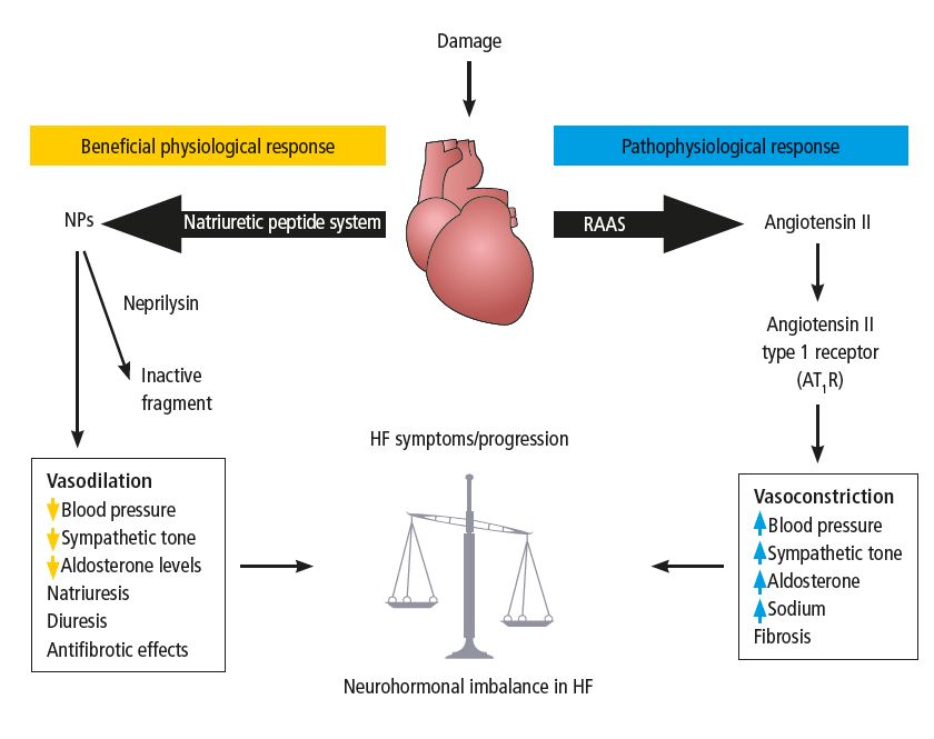 Figure 1. Heart failure is a state of neurohormonal imbalance. Adapted from Langenickel TH, Dole WP. Drug Discovery Today 2012;9:131–9. Copyright © 2013 The authors. Published by Elsevier Ltd