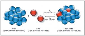VWF-FVIII interactions.